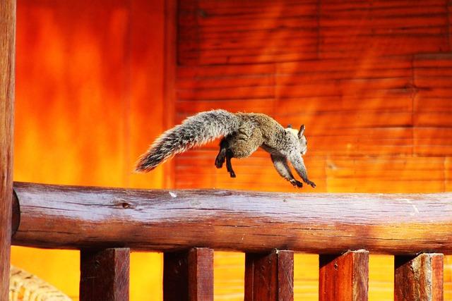 Squirrel, Animal, Wild