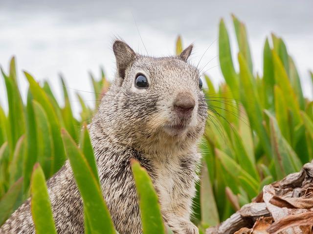 Squirrel, Animal, Mammal, Chipmunk, Species, Wild