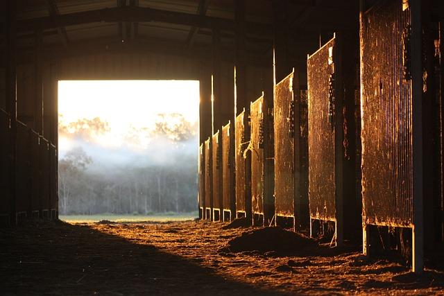 Horse, Stable, Farm, Animal, Barn, Sun