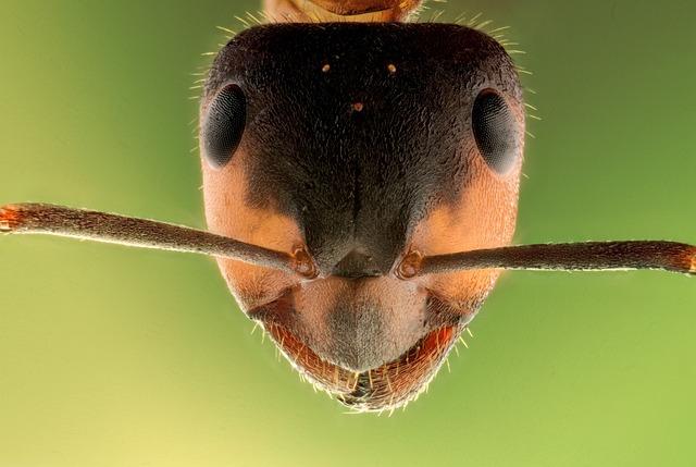 Stack, Insect, Ant, Macro, Animal, Head, Sharp, Micro