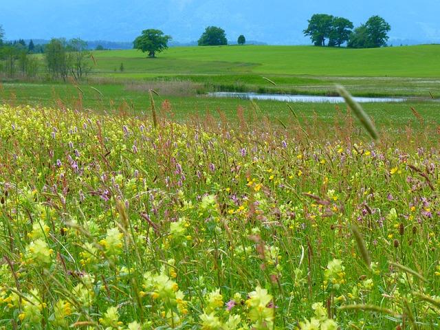 Riedwiese Meadow, Angustifolius, Plant, Staffelsee