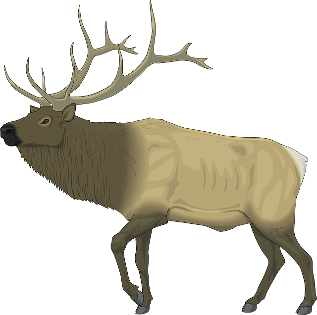 Moose, Large, Body, Animal, Mammal, Antlers, Stag
