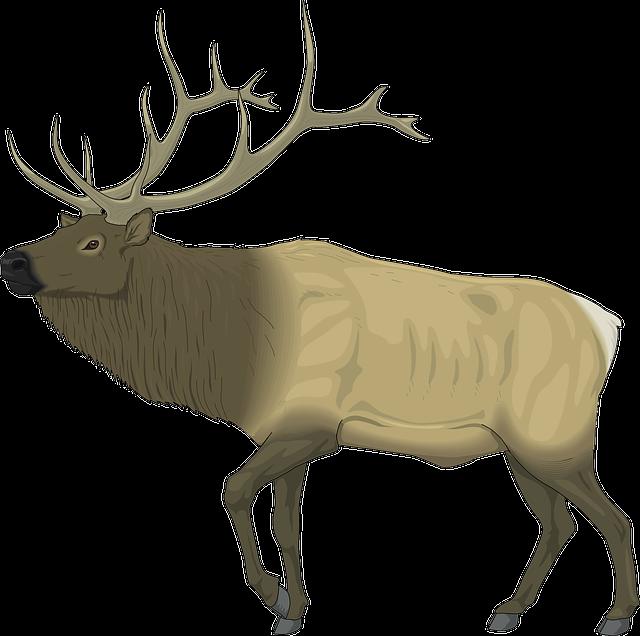 Moose, Large, Body, Animal, Mammal, Antlers, Stag