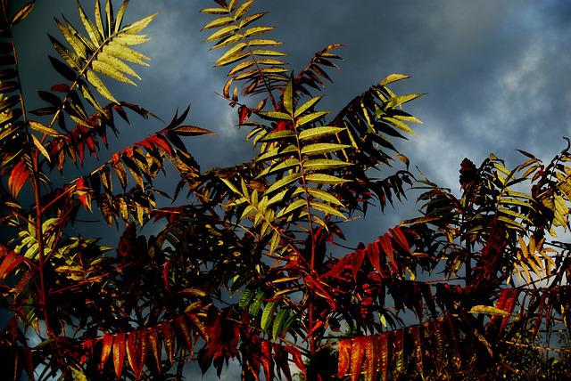 Staghorn, Tree, Leaf, Contrast, Clouds, Grey, Nature