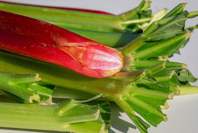 Rhubarb, Stalk, Red, Sour, Harvested Rhubarb