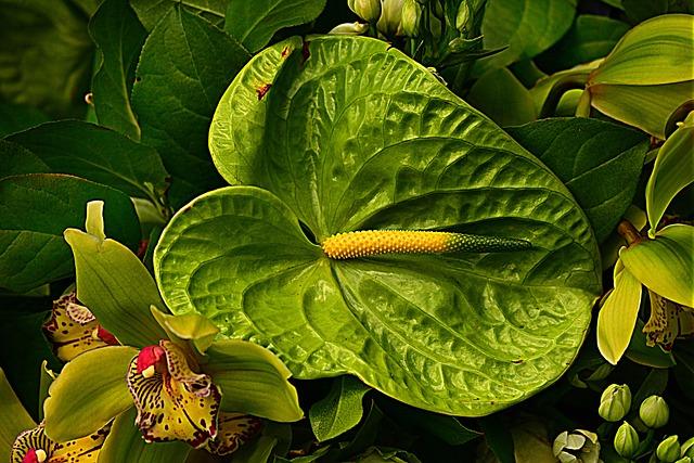 Anthurium, Flower, Stamen, Plant, Green