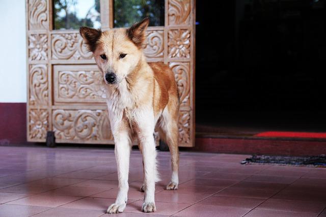 Dog, Thin, Curiosity, Stand