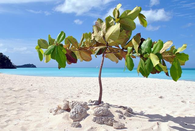 Antigua, Caribbean, Stand, Sea, Holiday