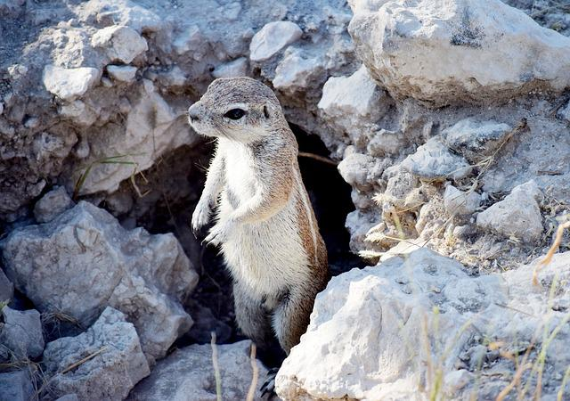 Squeeral, Small, Animal, Standing, Wild, Brown, Looking