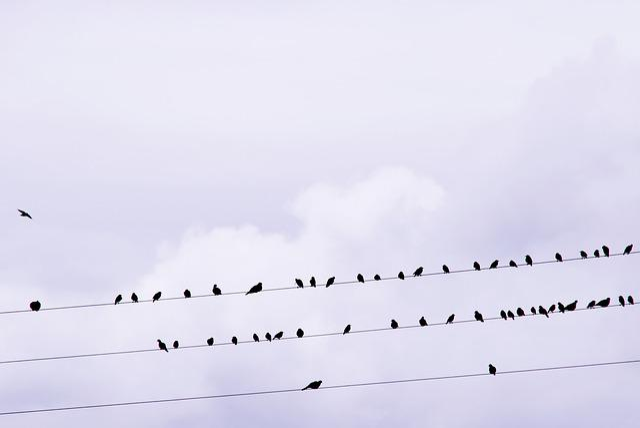 Birds, Stare, Songbird, Power Line, Bird, Star, Feather