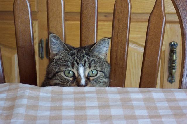 Cat, Eyes, Feline, Tabby, Peek, Boo, Stare, Play