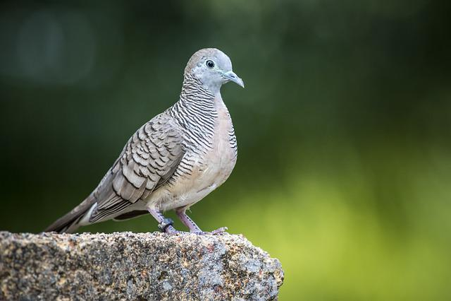 Starling, Sparrow, Forest, Jungle, Bird, Wildlife, Tree