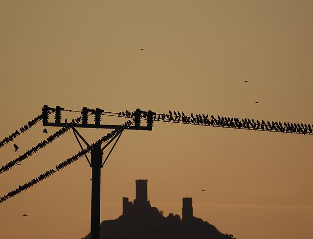 Autumn, Starlings, Birds, Bird, Nature, Starling