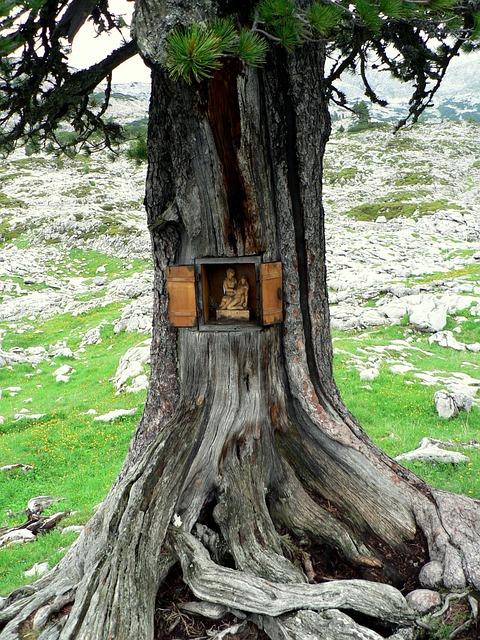 Steinernes Meer, Tree, Austria, Jesus, Altar, Wood