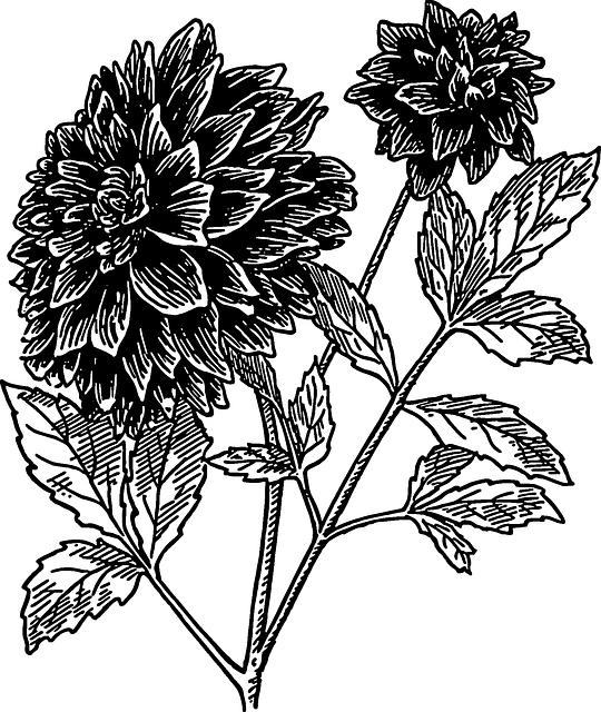 Dahlia, Flower, Stem, Leaves, Blooms, Floral, Blossom
