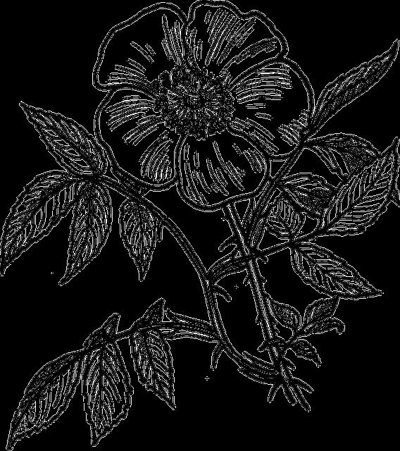 Eglantine, Roses, Plants, Flowers, Leaves, Stems