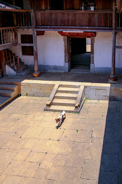Dog, Saw, Courtyard, Steps Have To, Wall, White