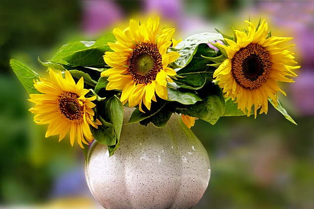 Still Life, Bouquet, Sun Flower, Helianthus Annuus