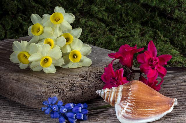 Hyacinth, Wood, Wooden Board, Still Life, Shell