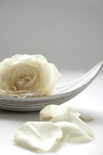 Rose, White, Still Life, Blossom, Bloom, White Roses