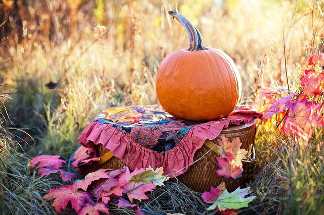 Autumn, Fall, Still-life, Still Life, Pumpkin