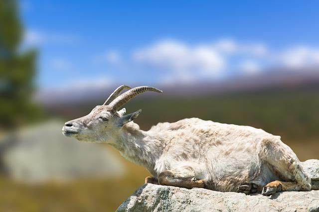Nature, Animal World, Animal, Goat, Stone, Zoo, Fur