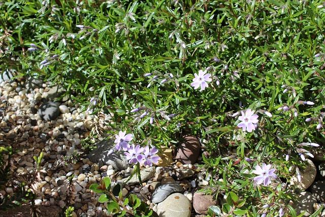 Stone Bed, Plant, Stone Bedding Plant, Nature, Garden