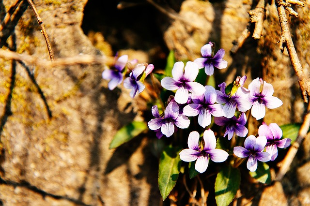 Flowers, Stone Flower, Flower, Background, Nature
