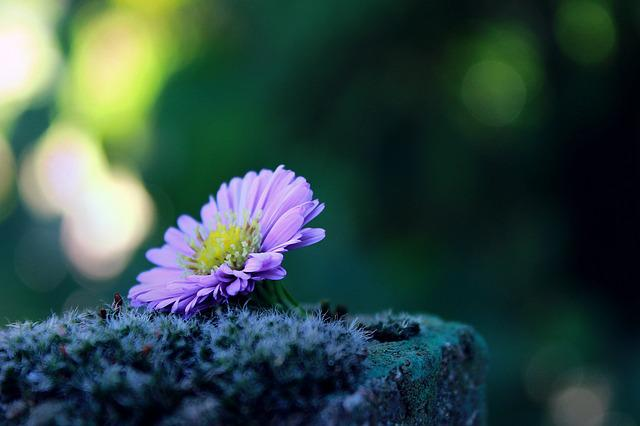 Flower, Lonely, Alone, Moss, Stone, Deco, Decoration