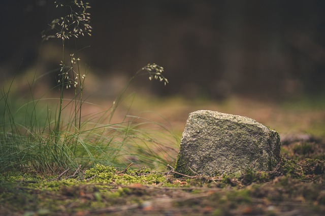 Forest, Stone, Nature, Ground, Mystical