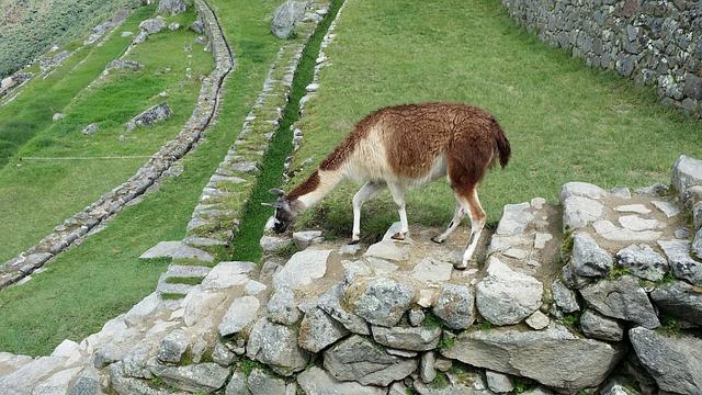 Machu Picchu's Llama, Move, Stone Steps, Loneliness