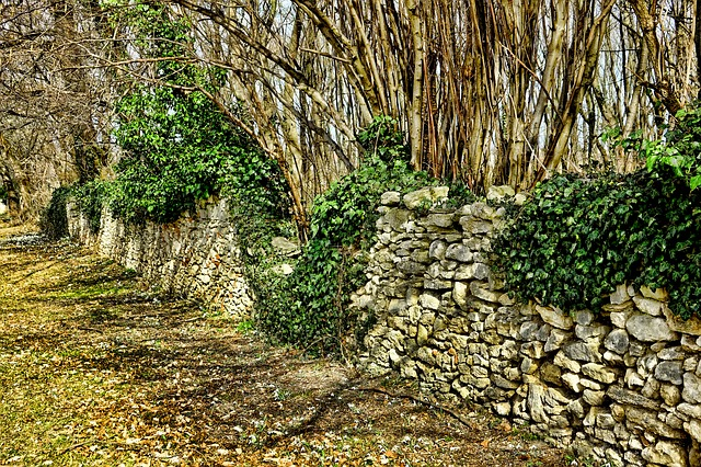 Nature, Stone, Stone Wall, Plant, Spring, Green Leaves
