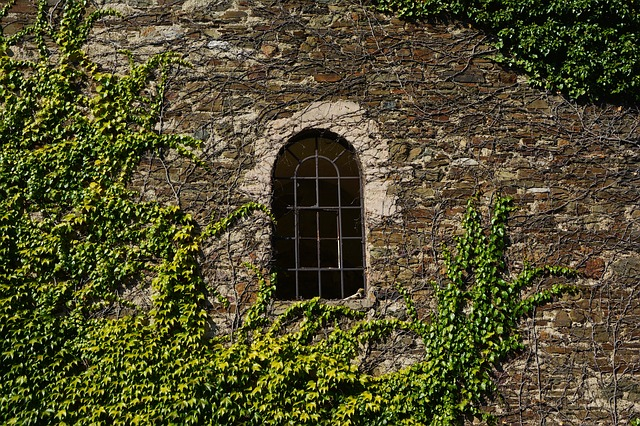 Wall, Stone Wall, Vine, Overgrown, Natural Stone Wall