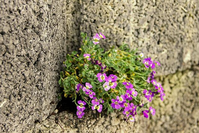 Blue Pillow, Pink, Wall, Wall Flower, Stone Wall