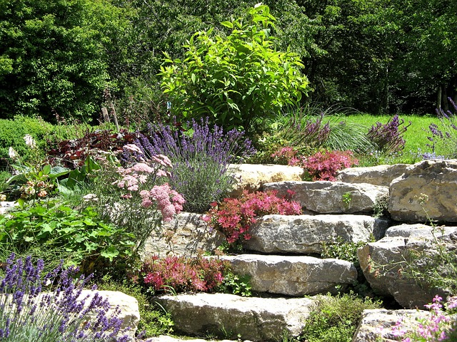 Nature, Stone Garden, Plant, Stone Wurz, Succulent