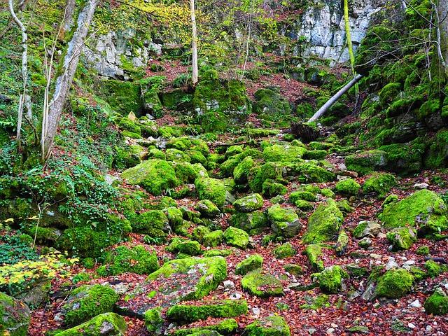 Slope, Waldhang, Stones, Bemoost, Elsachbröller, Cave