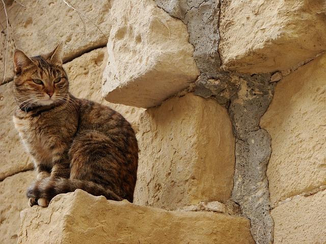Cat, Limestone, Stones