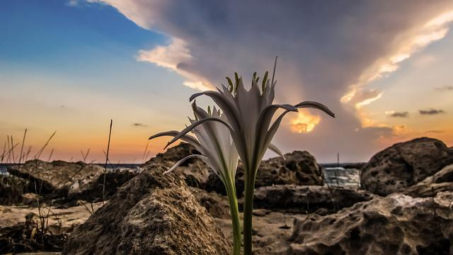 Sand Lily, Sunset, Sky, Clouds, Beach, Stones, Dusk