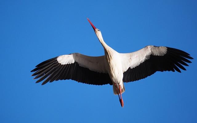 Nature, Animals, Birds, Stork