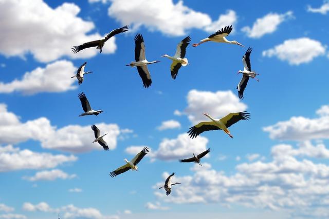 Heart, Clouds, Stork, Storks, Love, Flying