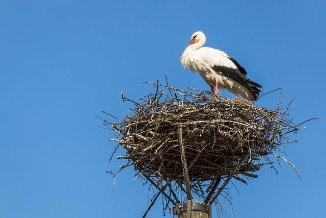 Stork, Nest, Bird, Storchennest, Storks, Rattle Stork