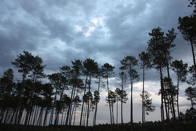 Pine, Storm, Sky