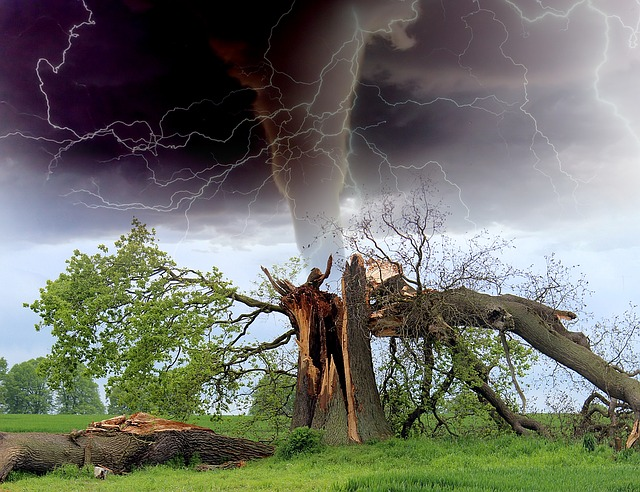 Tornado, Storm, Tree Branch, Rainstorm, Thunderstorm