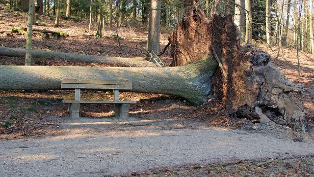 Storm, Tree, Tree Root