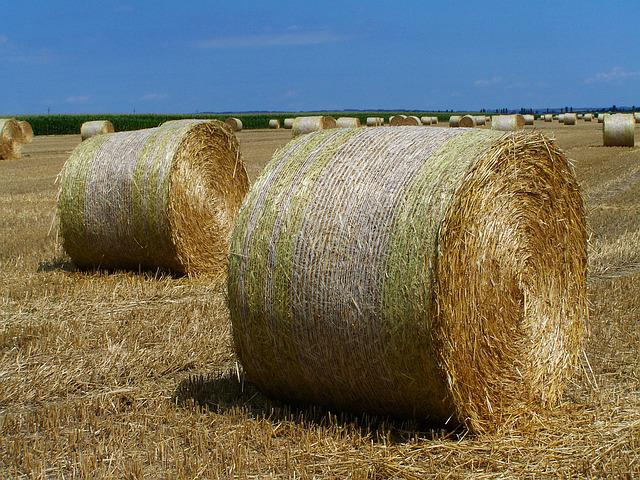 Straw Bales, Harvested Crops, Agriculture