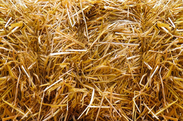 Straw, Autumn, Straw Bales, Agriculture, Close