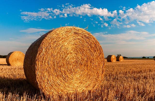 Hay Bales, Round, Farm, Straw Bales, Straw, Hay, Field