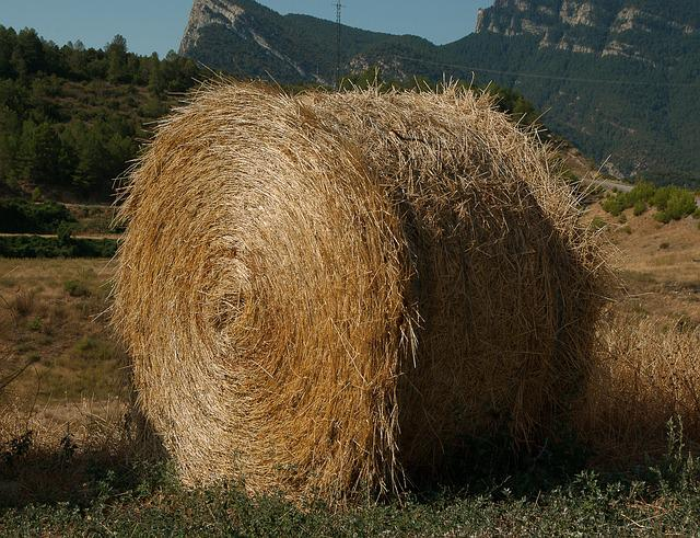 Straw, Livestock, Forage, Breeding