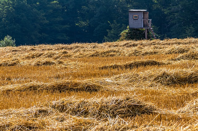 Straw, Meadow, Field, Nature, Landscape, Agriculture