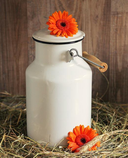Milk Can, Gerbera, Flowers, White, Straw, Orange
